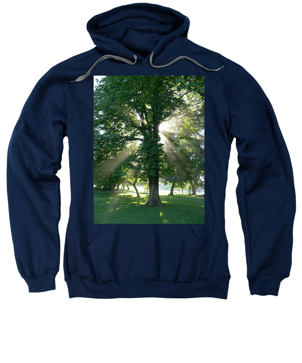 Tree Sweatshirt featuring the photograph Morning Tree by Angela Wright