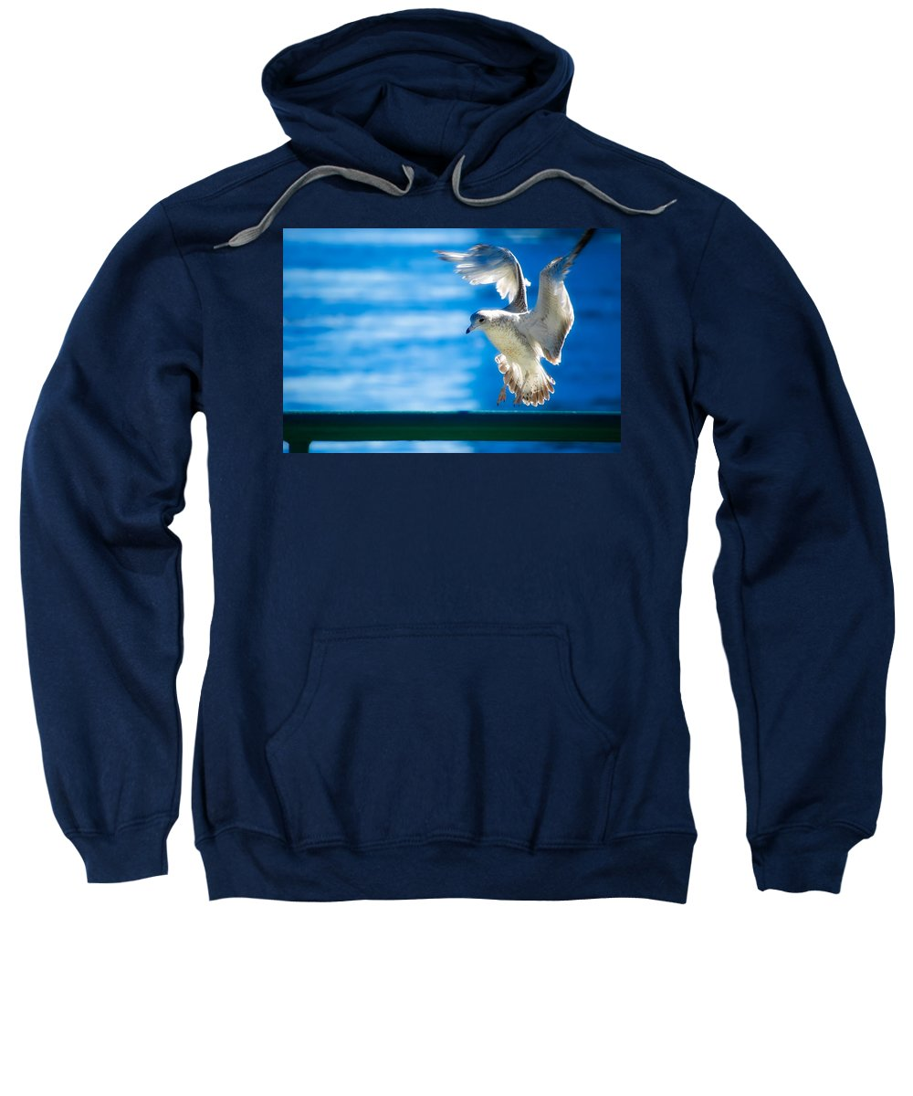 Animal Sweatshirt featuring the photograph Peace Gull by Rich Leighton