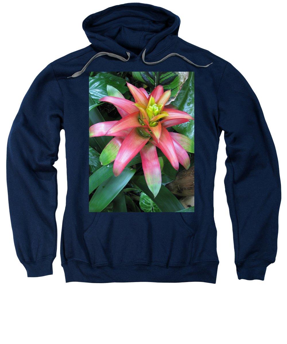 Tropics Sweatshirt featuring the photograph Peek-a-boo Beauty by Carolyn Jacob