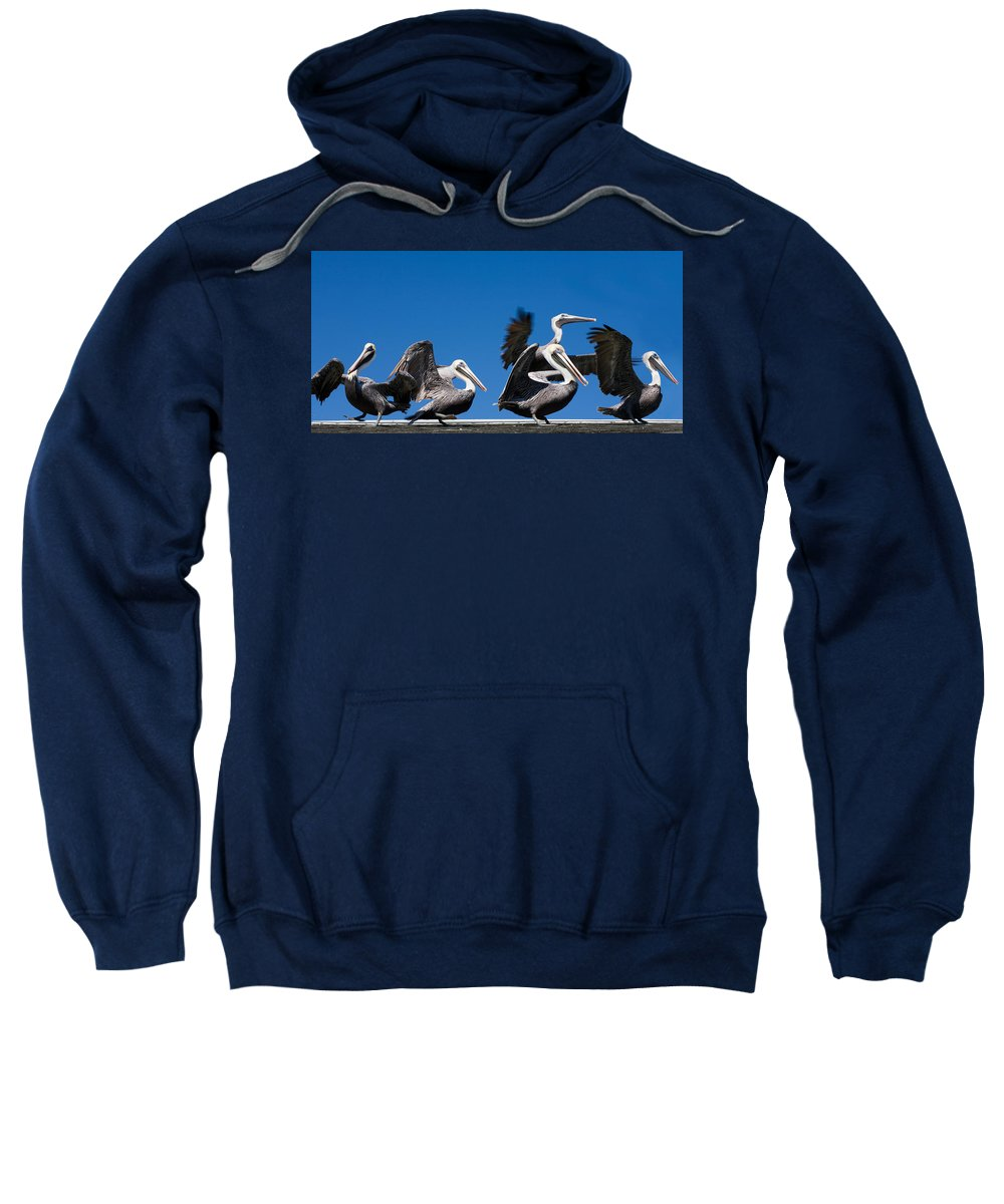 Pelicans Sweatshirt featuring the photograph Pelicans Take Flight by Mal Bray