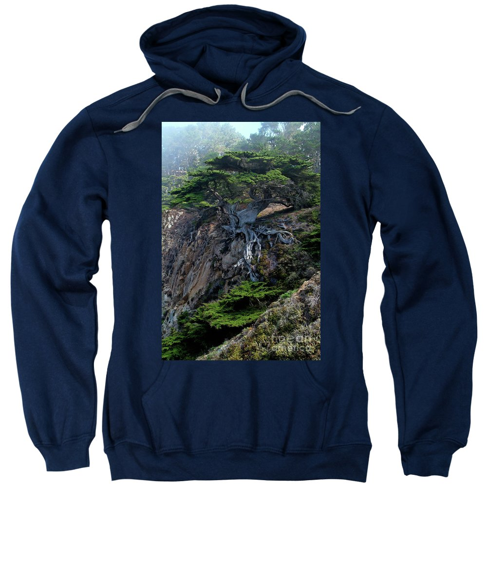 Landscape Sweatshirt featuring the photograph Point Lobos Veteran Cypress Tree by Charlene Mitchell