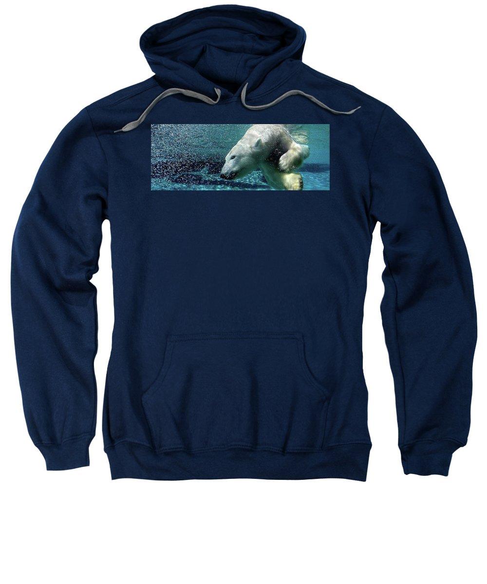 Sweatshirt featuring the photograph Polar Bear by Alan Thorpe