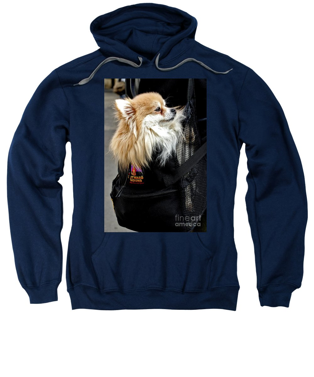 Dog Sweatshirt featuring the photograph Pooch In The Pouch by Madeline Ellis
