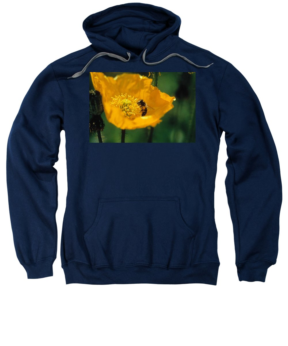 California Poppy Sweatshirt featuring the photograph Poppy With Bee Friend by Laurie Paci