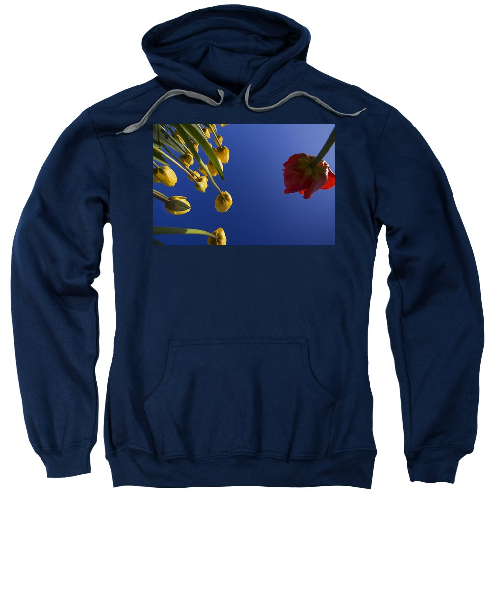 Floral Sweatshirt featuring the photograph Primary Colors by Karen Ulvestad