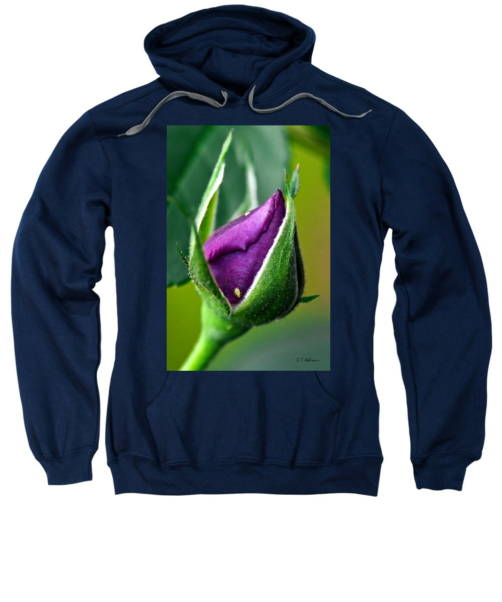 Rose Sweatshirt featuring the photograph Purple Rose Bud by Christopher Holmes