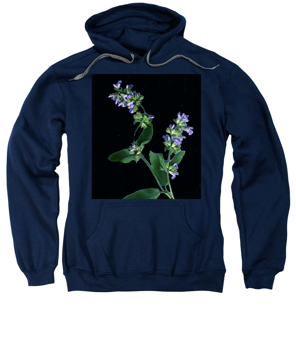 Sweatshirt featuring the photograph Sage Blossom by Wayne Potrafka