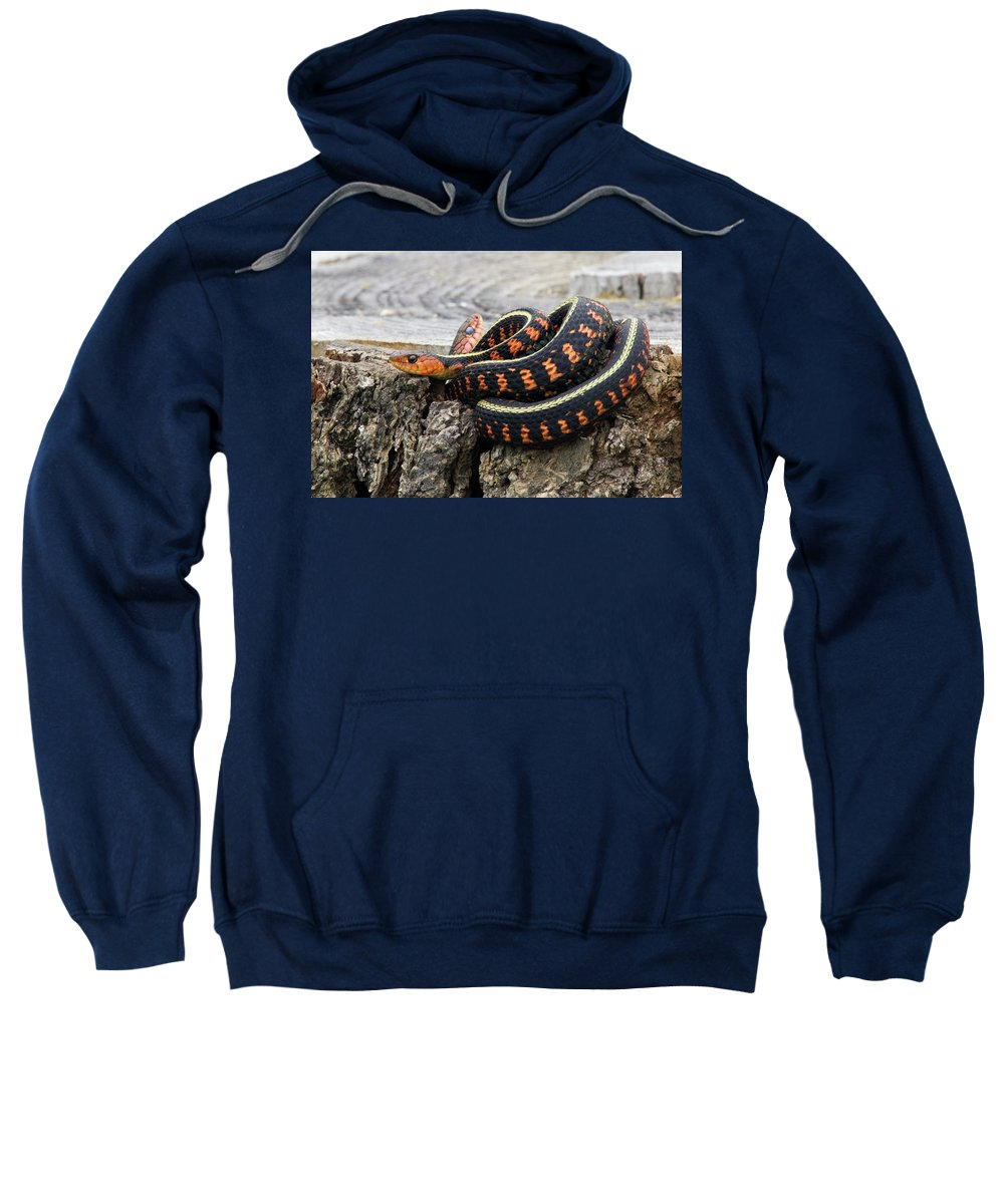 Orange Sweatshirt featuring the photograph Snakes On A Stump by Randall Ingalls