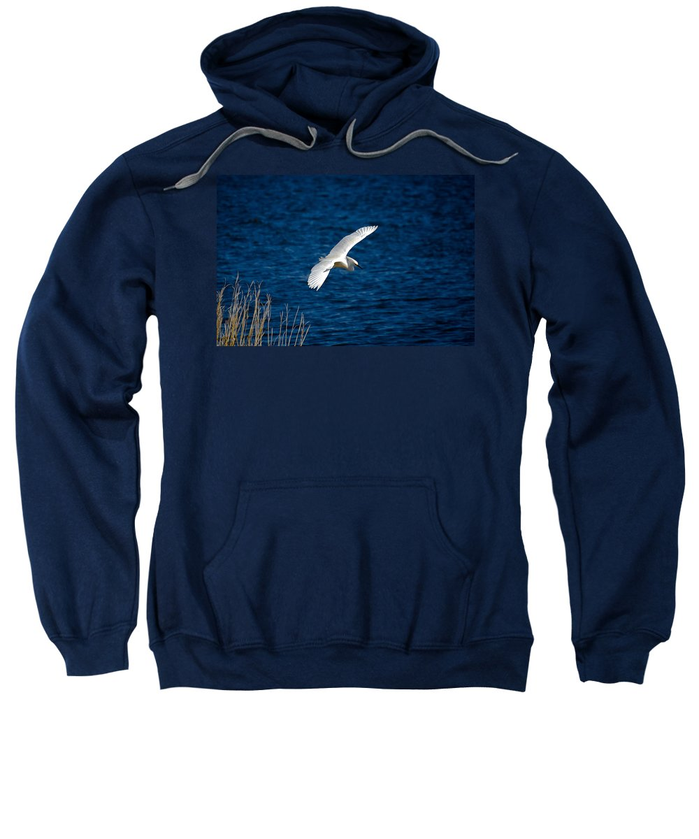Bird Sweatshirt featuring the digital art Soaring Snowy Egret by DigiArt Diaries by Vicky B Fuller