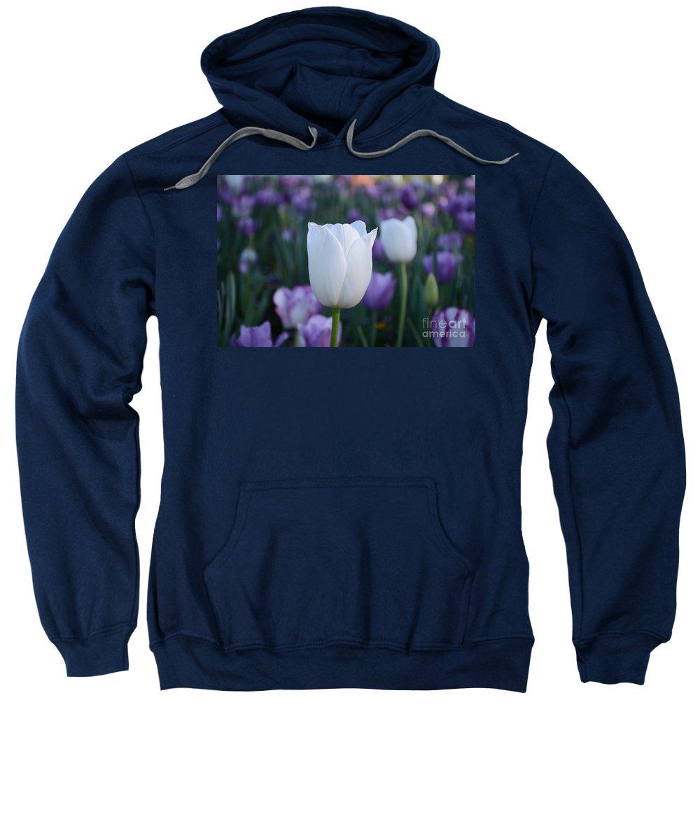 Sweatshirt featuring the painting Creators Handiwork by Constance Woods
