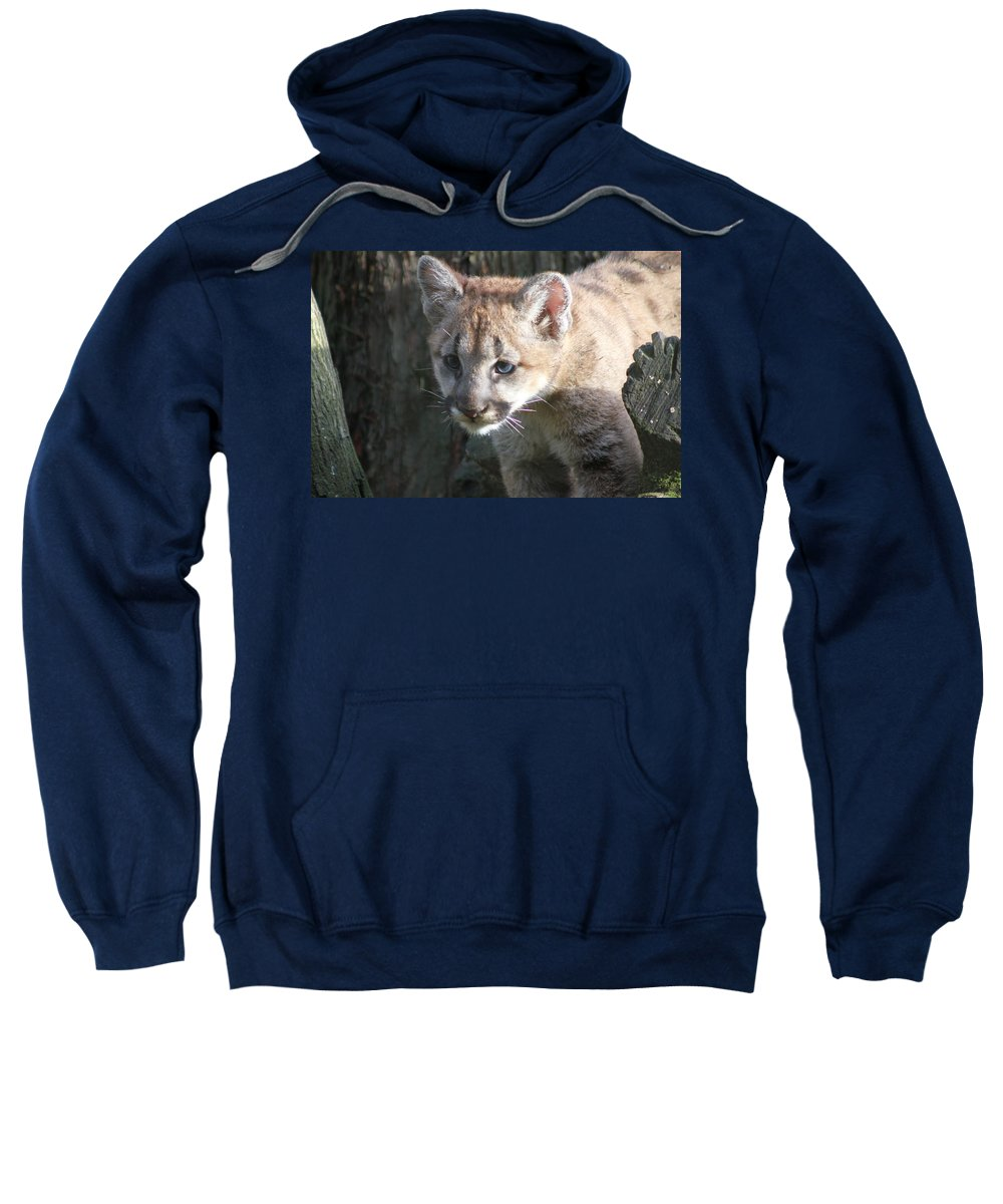 Cougar Sweatshirt featuring the photograph Studying The Ways by Laddie Halupa
