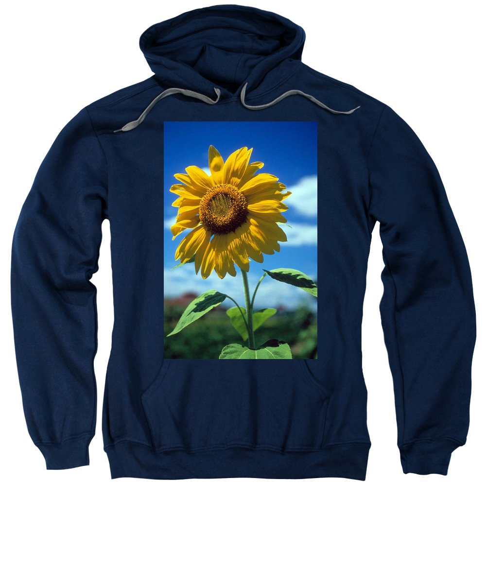 Sussex County Sweatshirt featuring the photograph Sussex County Sunflower by Laurie Paci