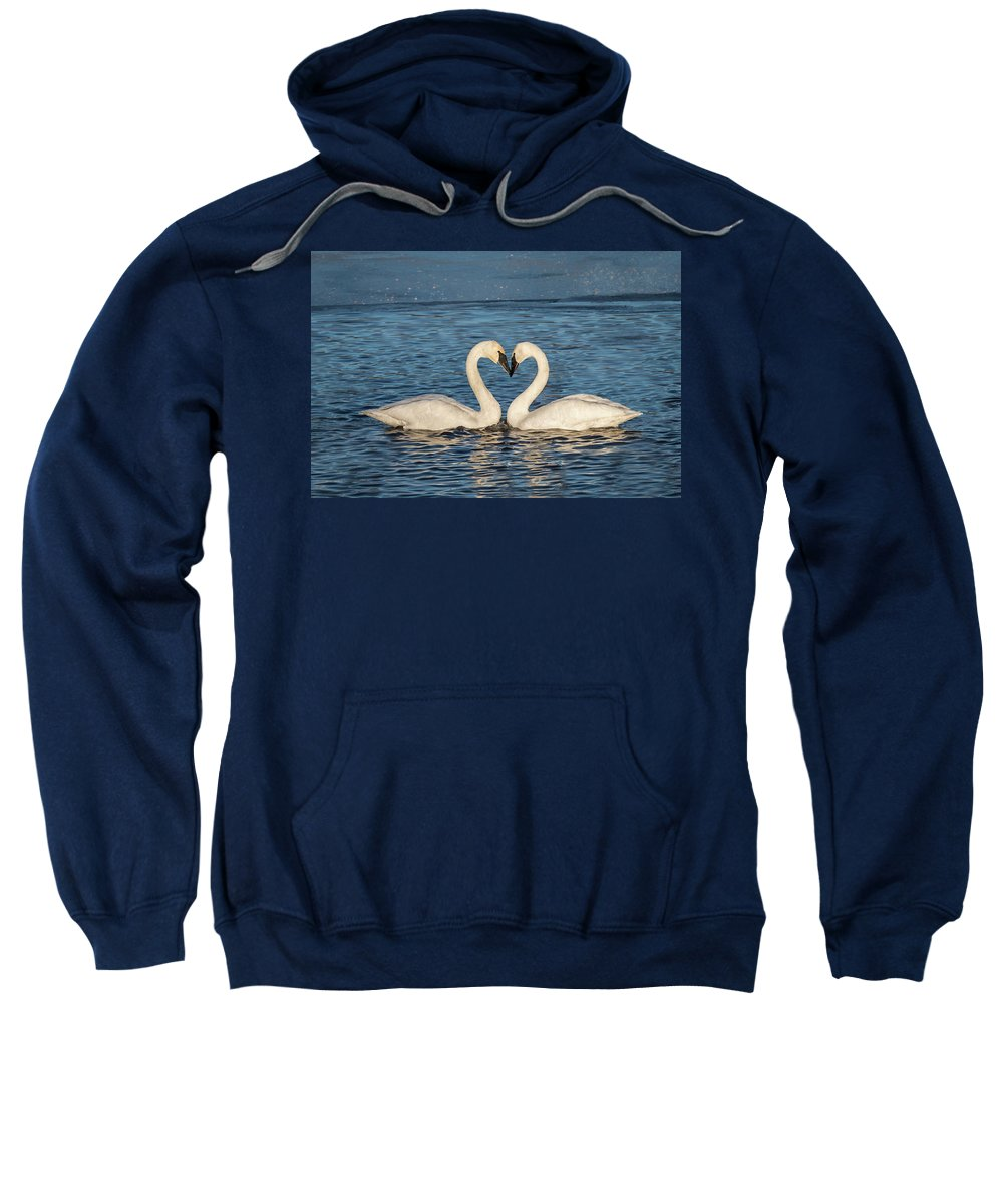 Swans Sweatshirt featuring the photograph Swan Heart by Patti Deters