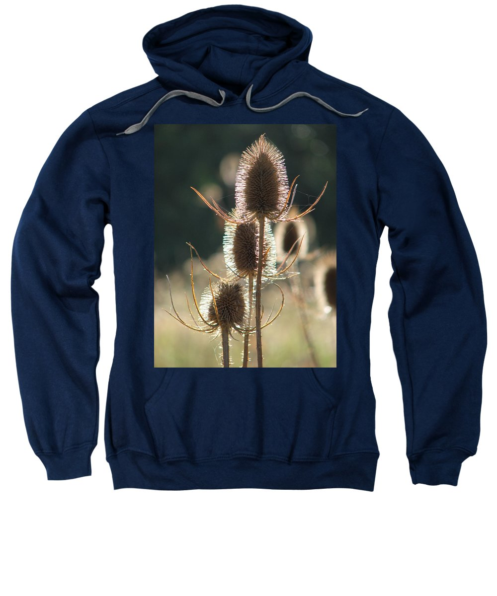 Teasle Sweatshirt featuring the photograph Teasle In Morning Light by Bob Kemp