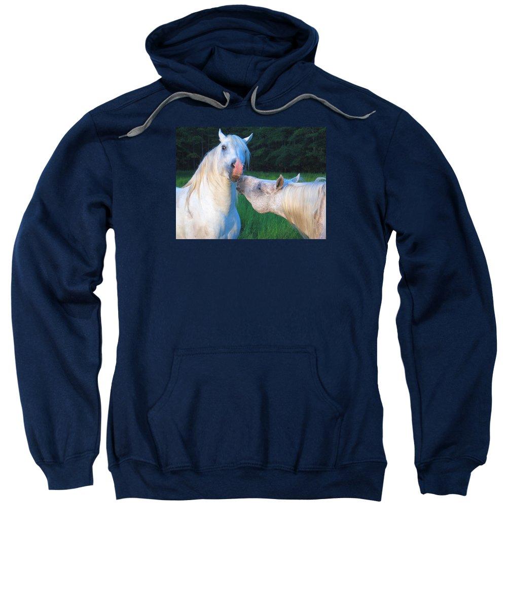 Stallions Sweatshirt featuring the photograph The Challange Begins by Dawn Johansen