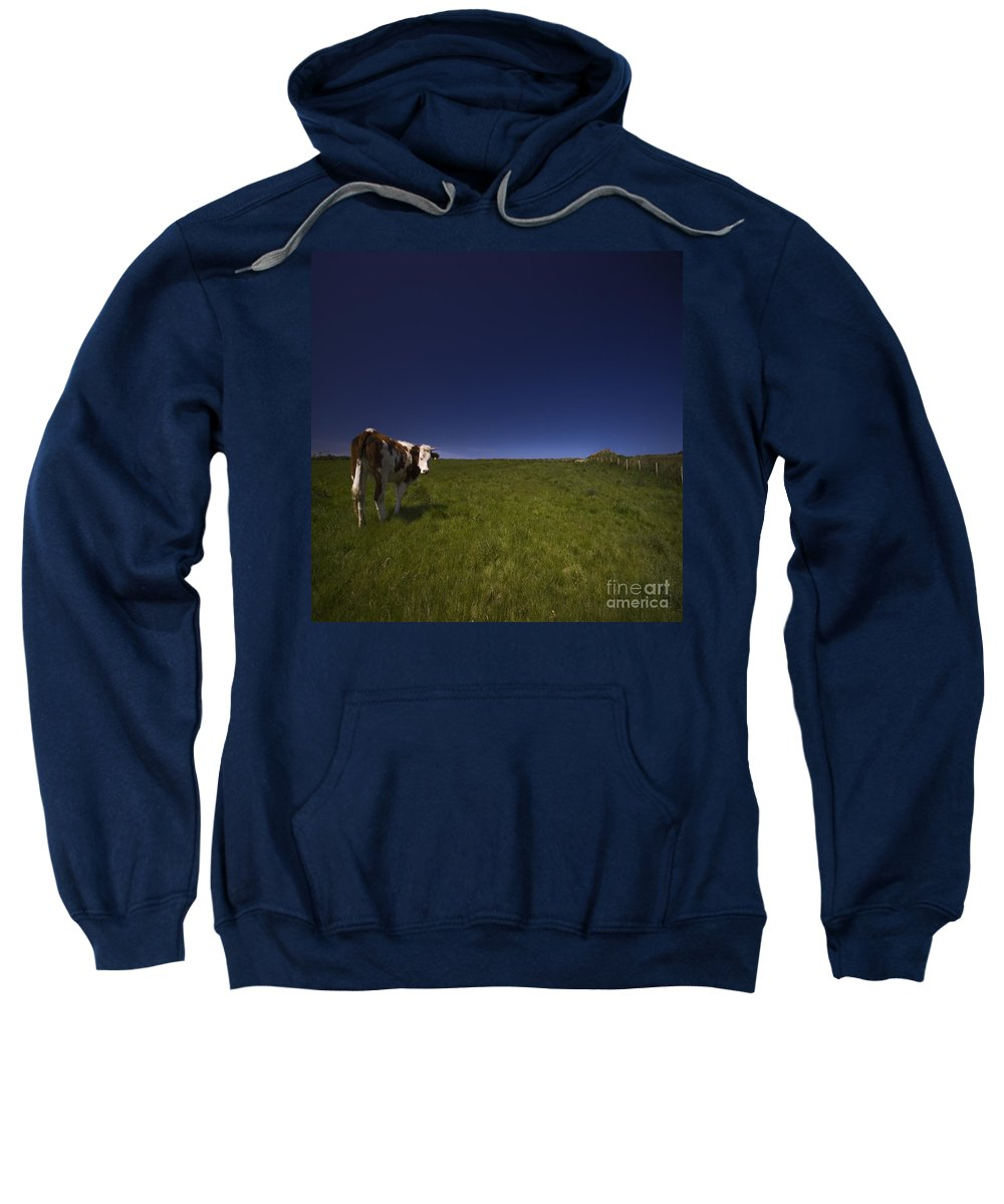 Cow Sweatshirt featuring the photograph The Moody Cow by Angel Tarantella