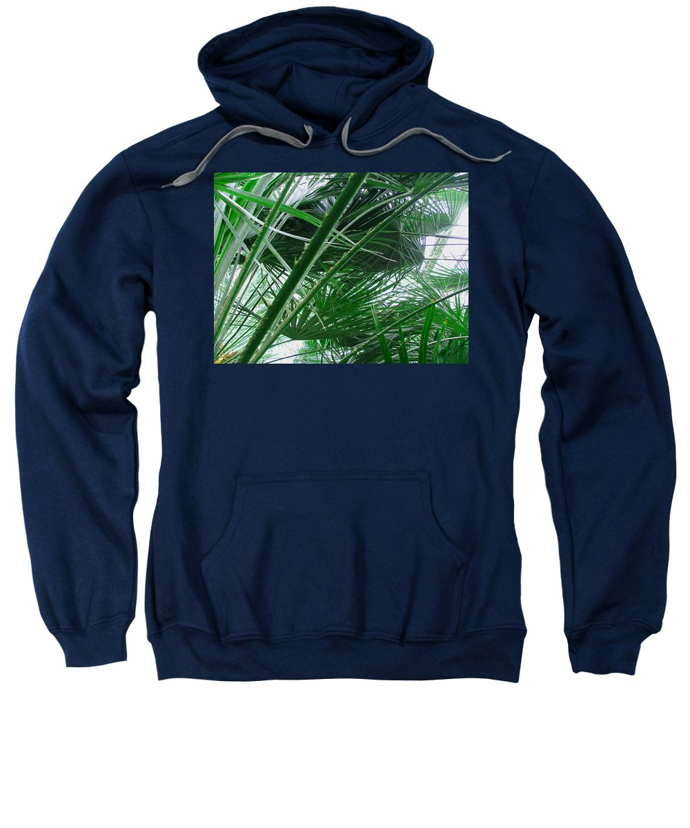 Palm Tree Sweatshirt featuring the photograph The Palm House Kew England by Heather Lennox