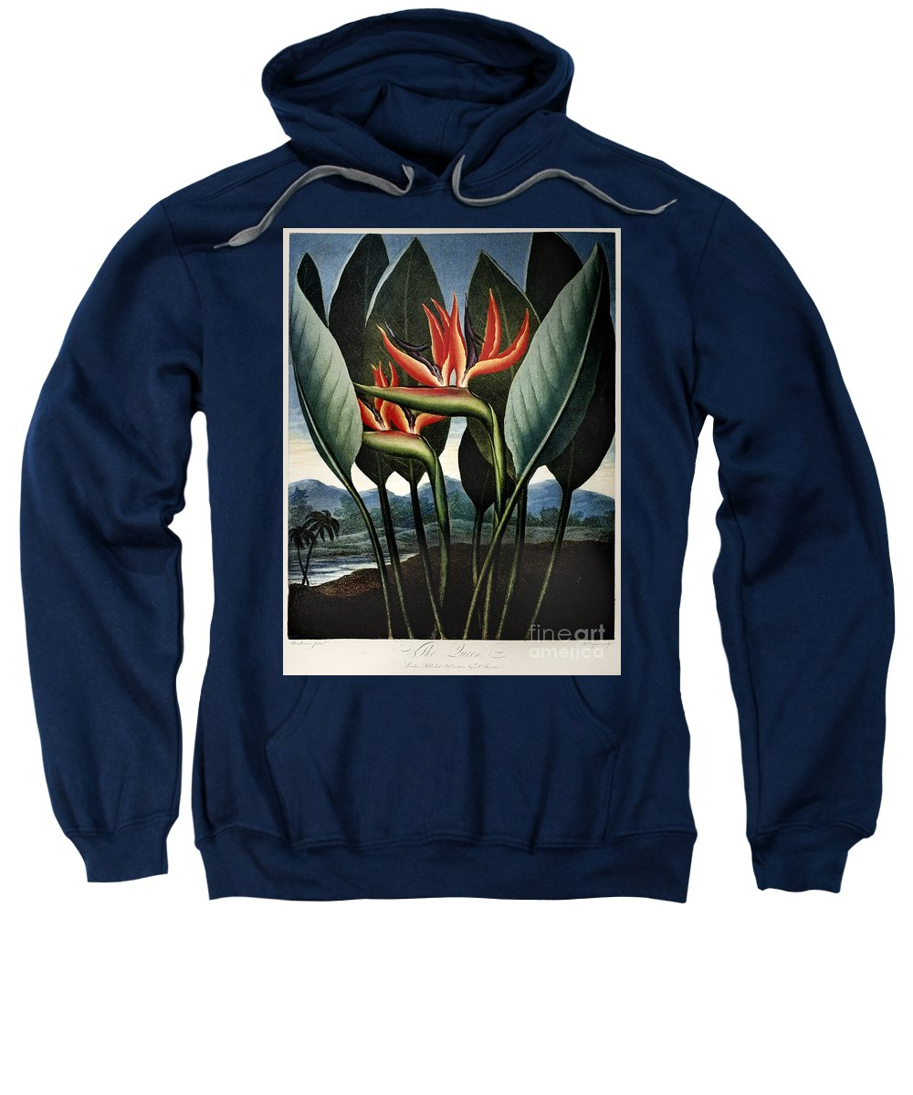 1804 Sweatshirt featuring the photograph Thornton: Strelitzia by Granger