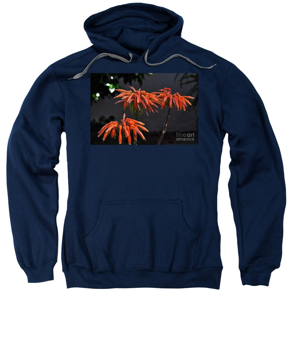 Clay Sweatshirt featuring the photograph Top Of Aloe Vera by Clayton Bruster