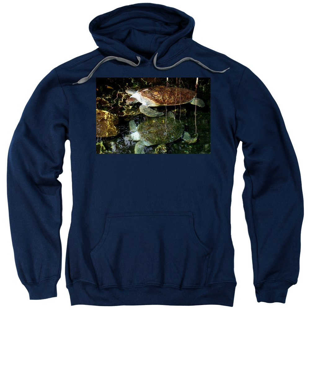 Turtle Sweatshirt featuring the photograph Turtles by Angela Murray