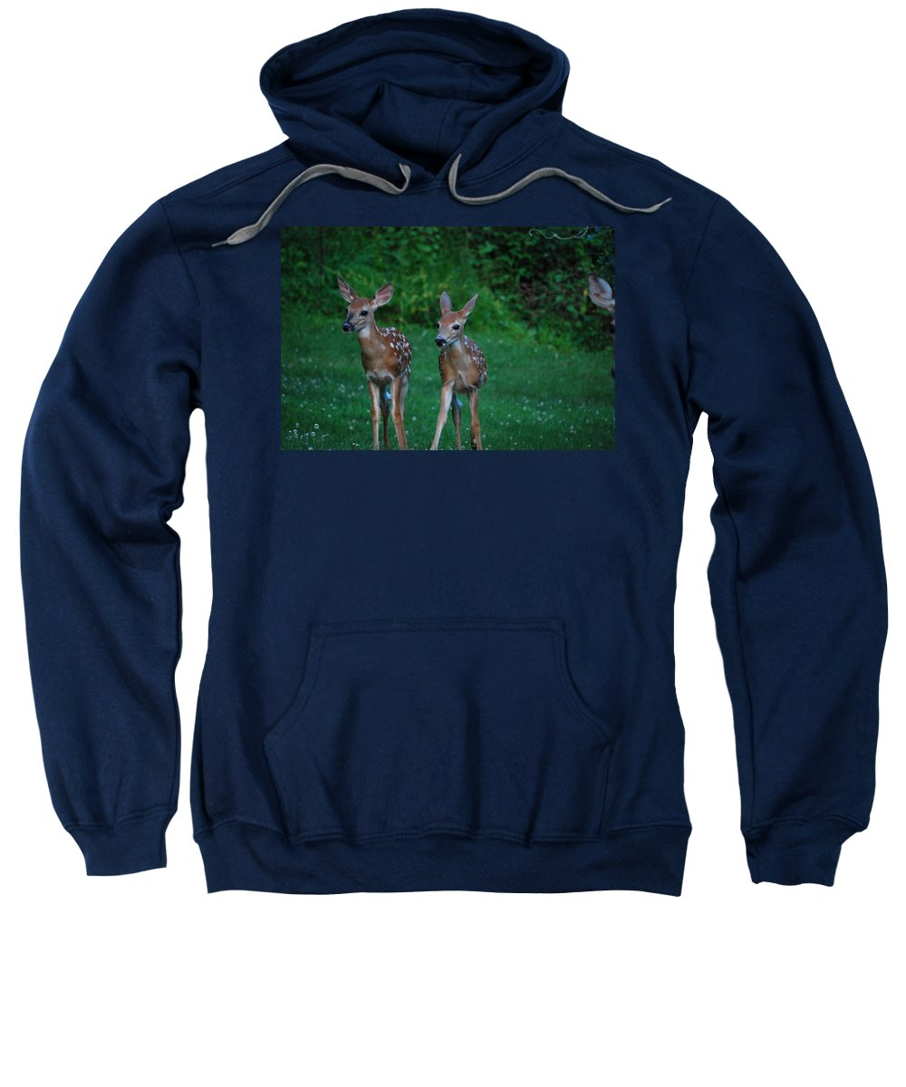 Deer Sweatshirt featuring the photograph Twins by Lori Tambakis