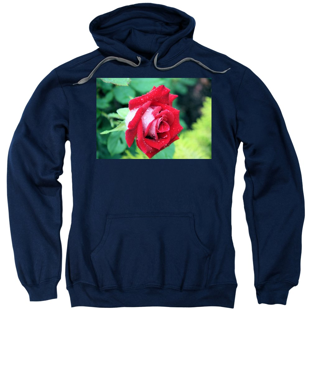 Rose Sweatshirt featuring the photograph Very Dewy Rose by Kristin Elmquist