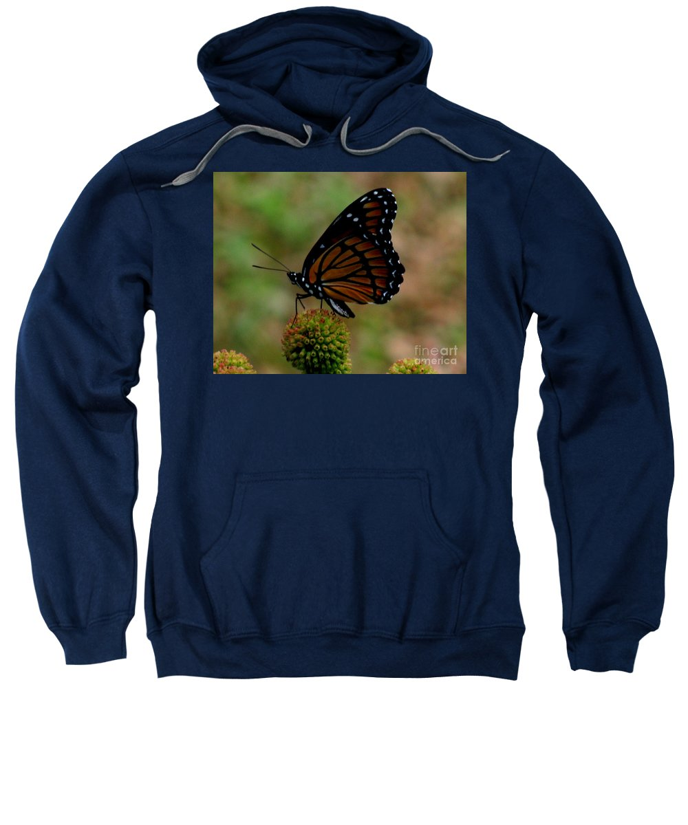 Butterfly Sweatshirt featuring the photograph Viceroy Butterfly by Donna Brown