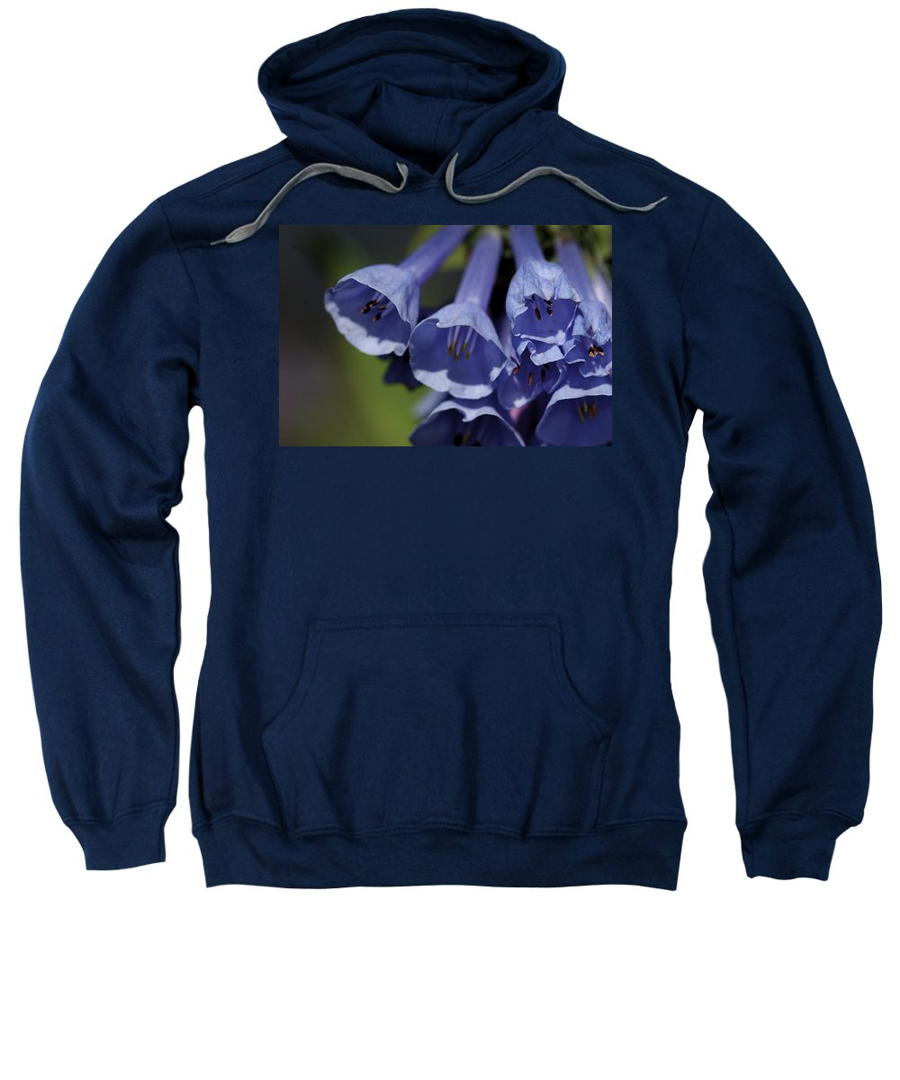 Background Sweatshirt featuring the photograph Virginia Bluebells by Jack R Perry