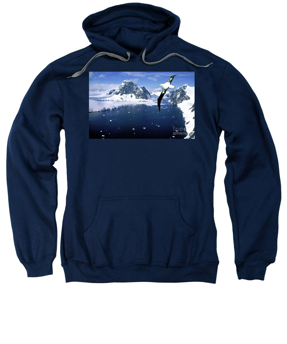 Wandering Albatross Sweatshirt featuring the photograph Wandering Albatross Over The Le Maire Channel by Wilf Doyle