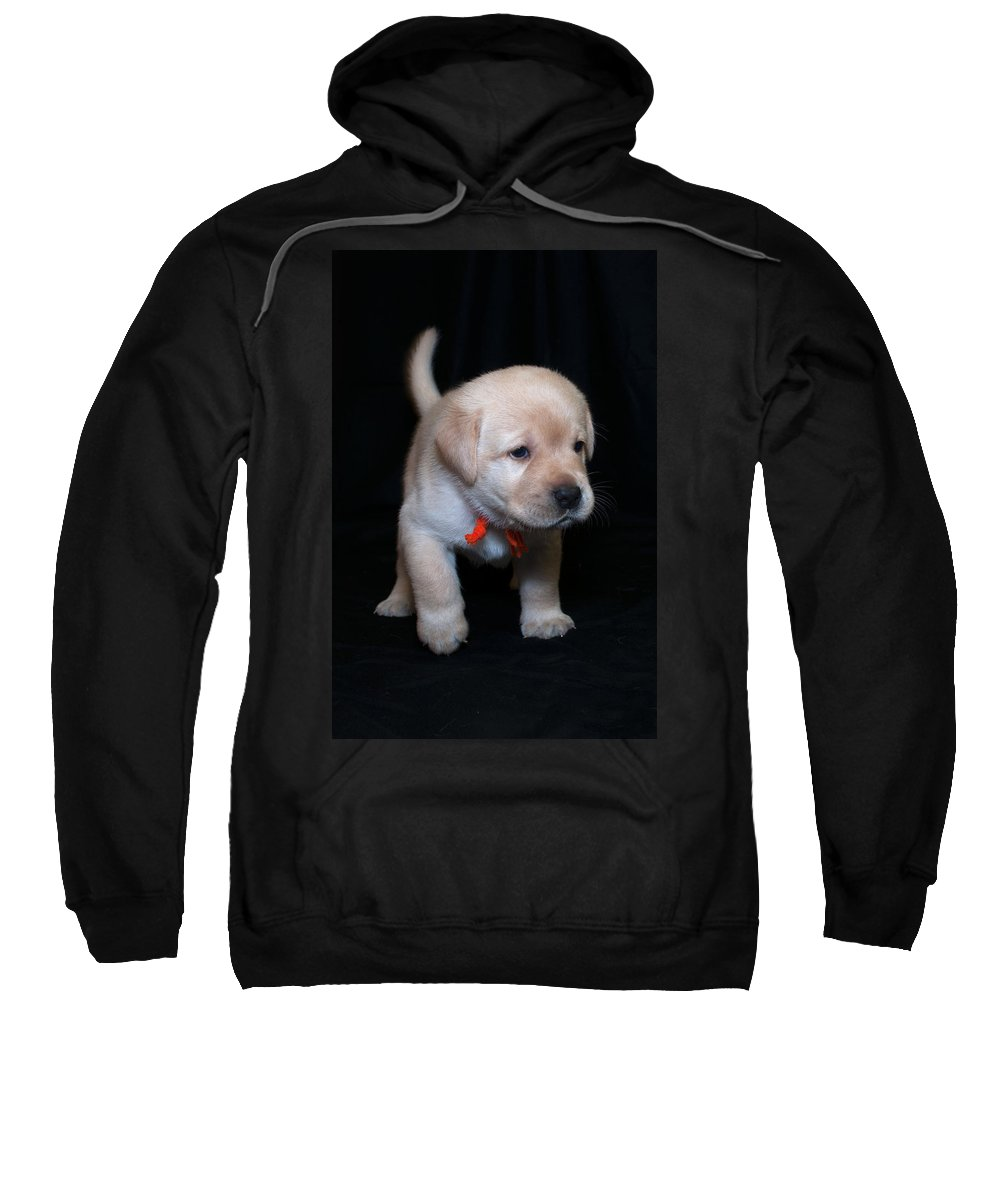 Lab Sweatshirt featuring the photograph 4 Week Old Lab Puppy by Photos By Cassandra