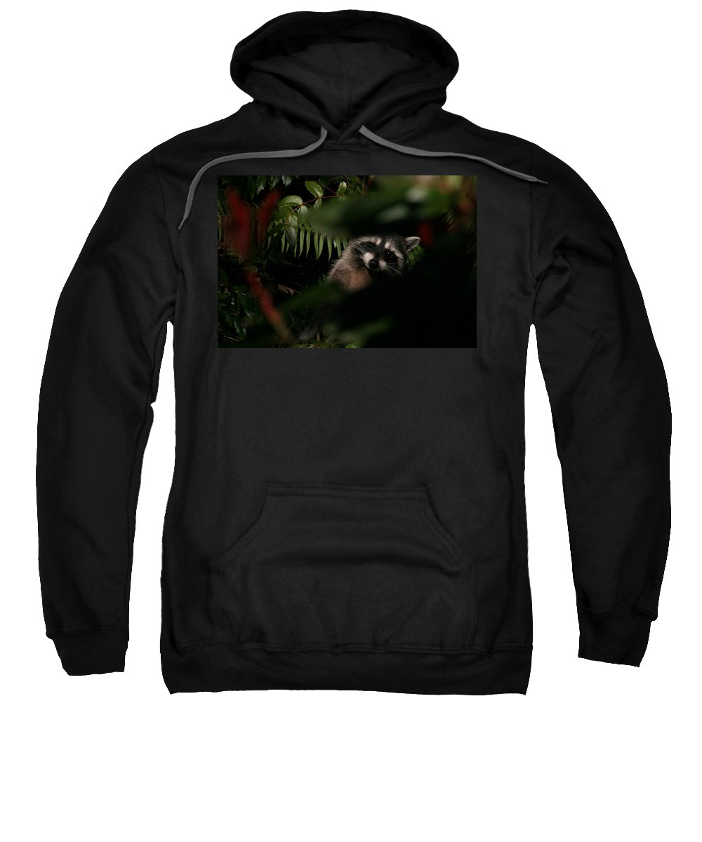 Animals Sweatshirt featuring the photograph I Can See You Mr. Raccoon by Kym Backland