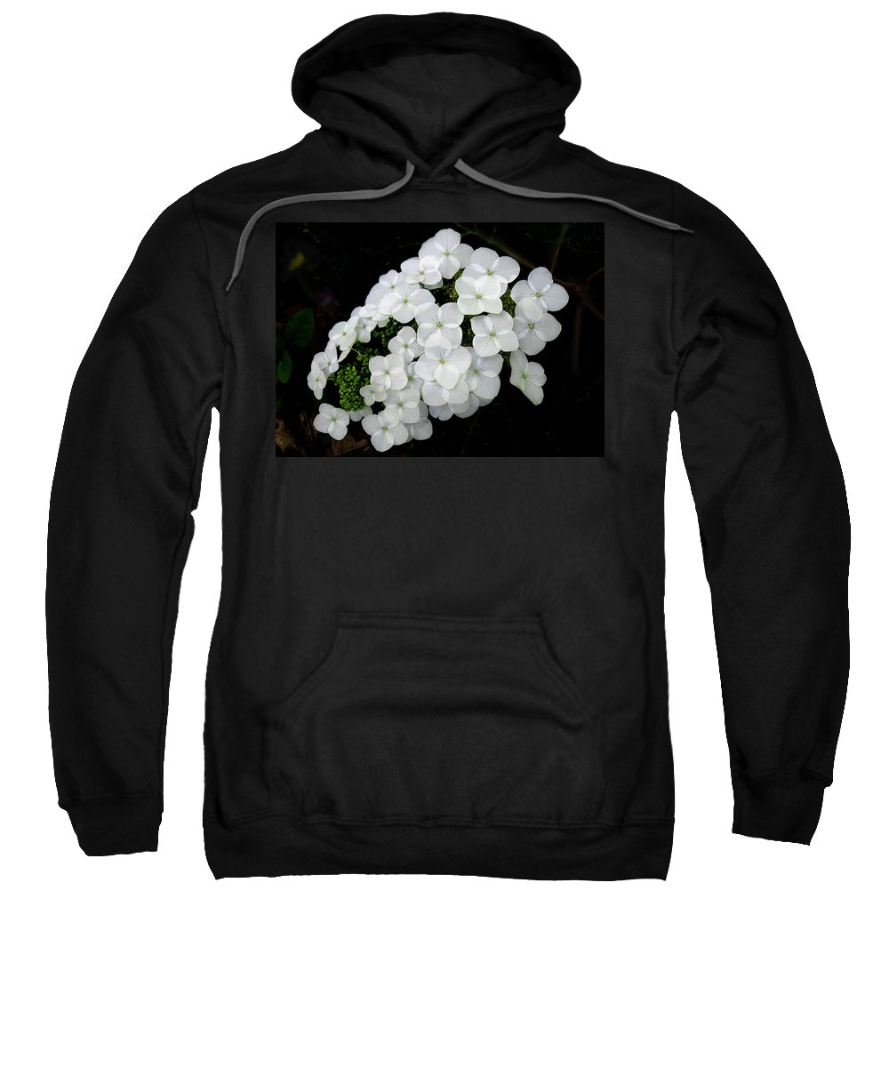 Hydrangea Quercifolia Sweatshirt featuring the photograph Oak Leaf Hydrangea by William Tanneberger