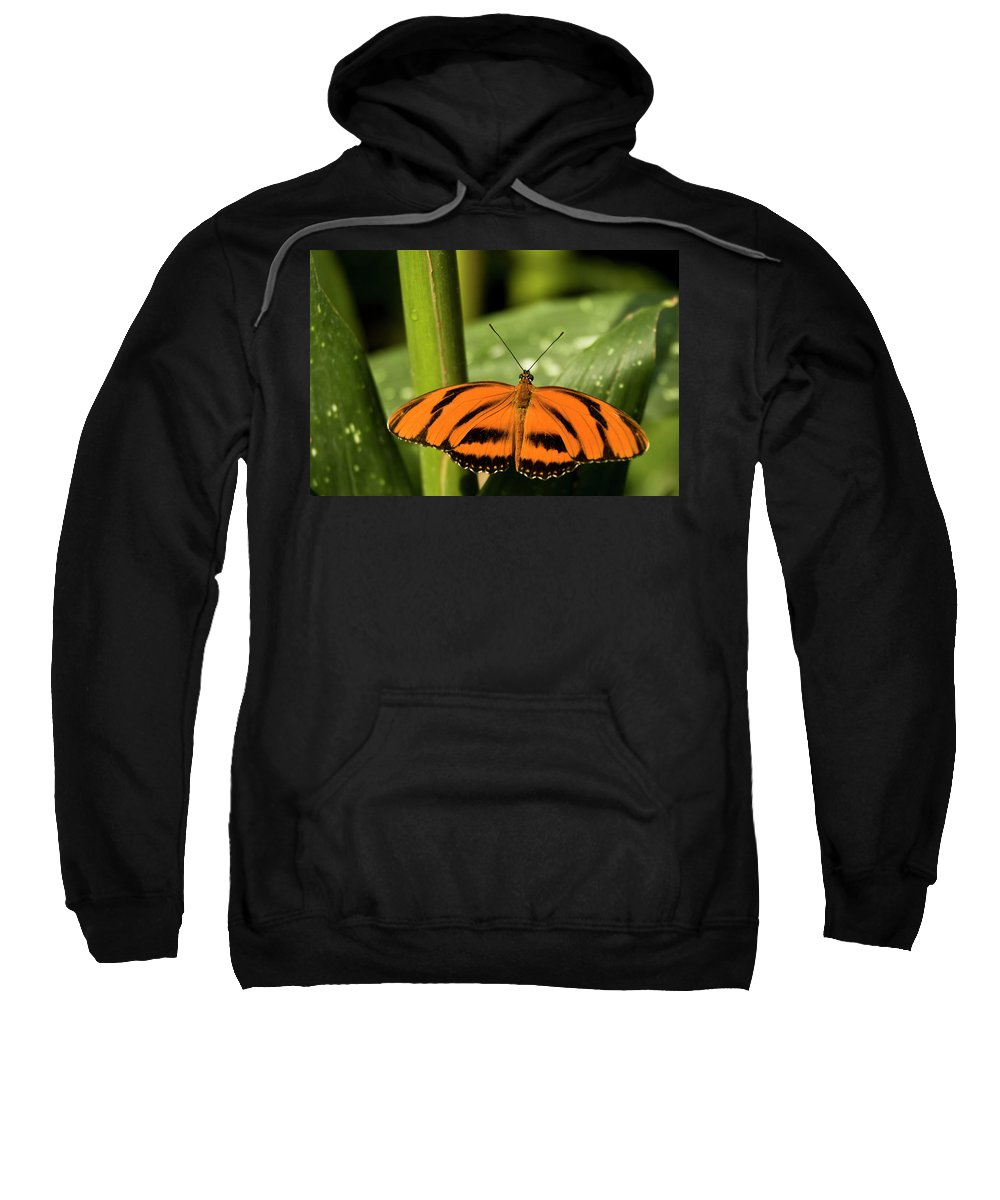Antennas Sweatshirt featuring the photograph A Banded Orange Heliconian Butterfly by Henry Georgi