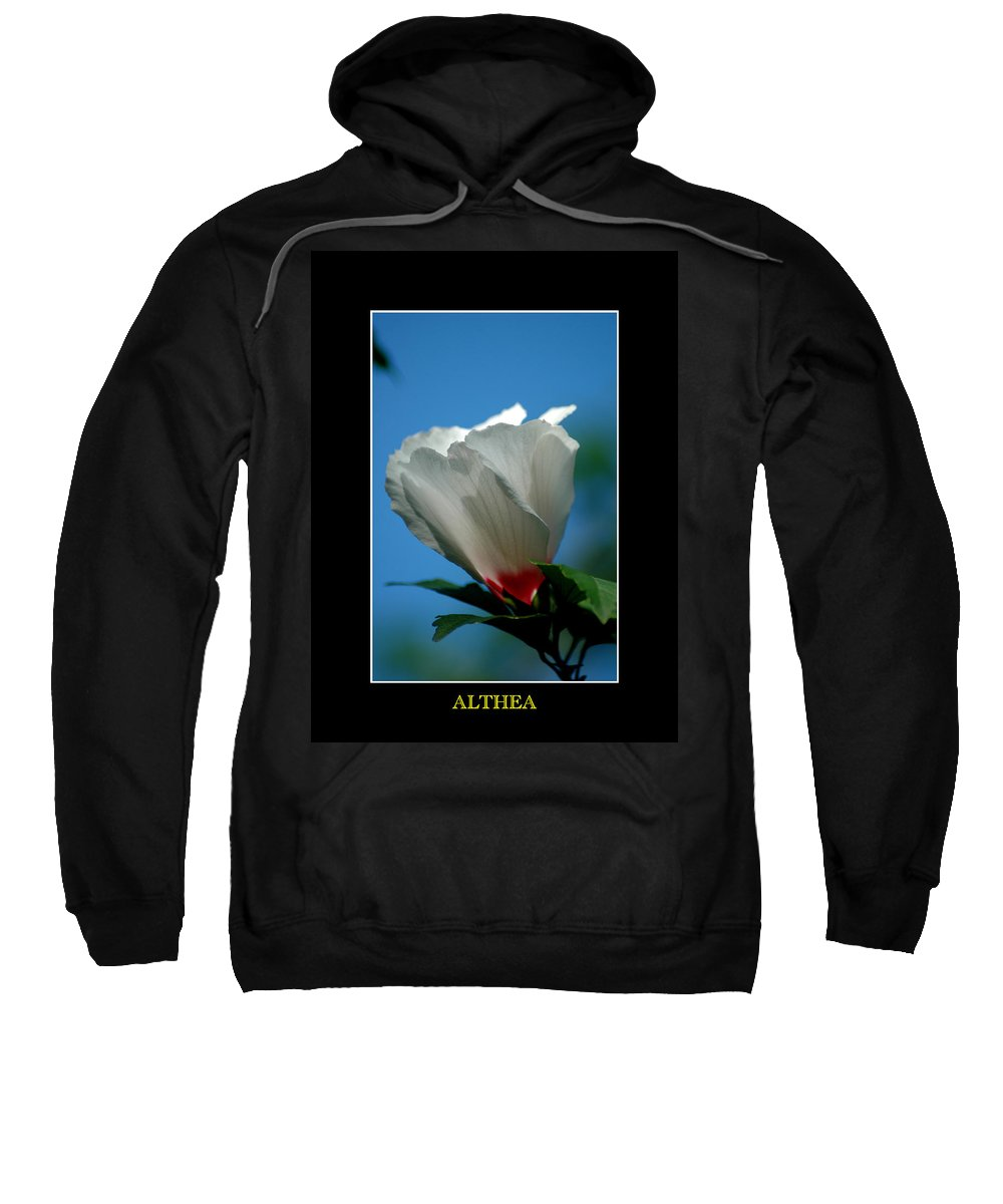Plant Sweatshirt featuring the photograph Althea Flower by David Weeks