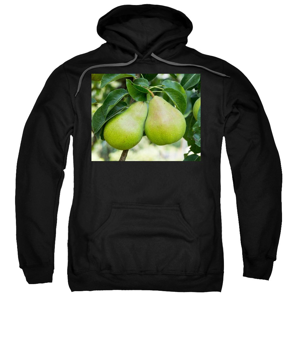 Agriculture Sweatshirt featuring the photograph Bartlett Pears by John Trax