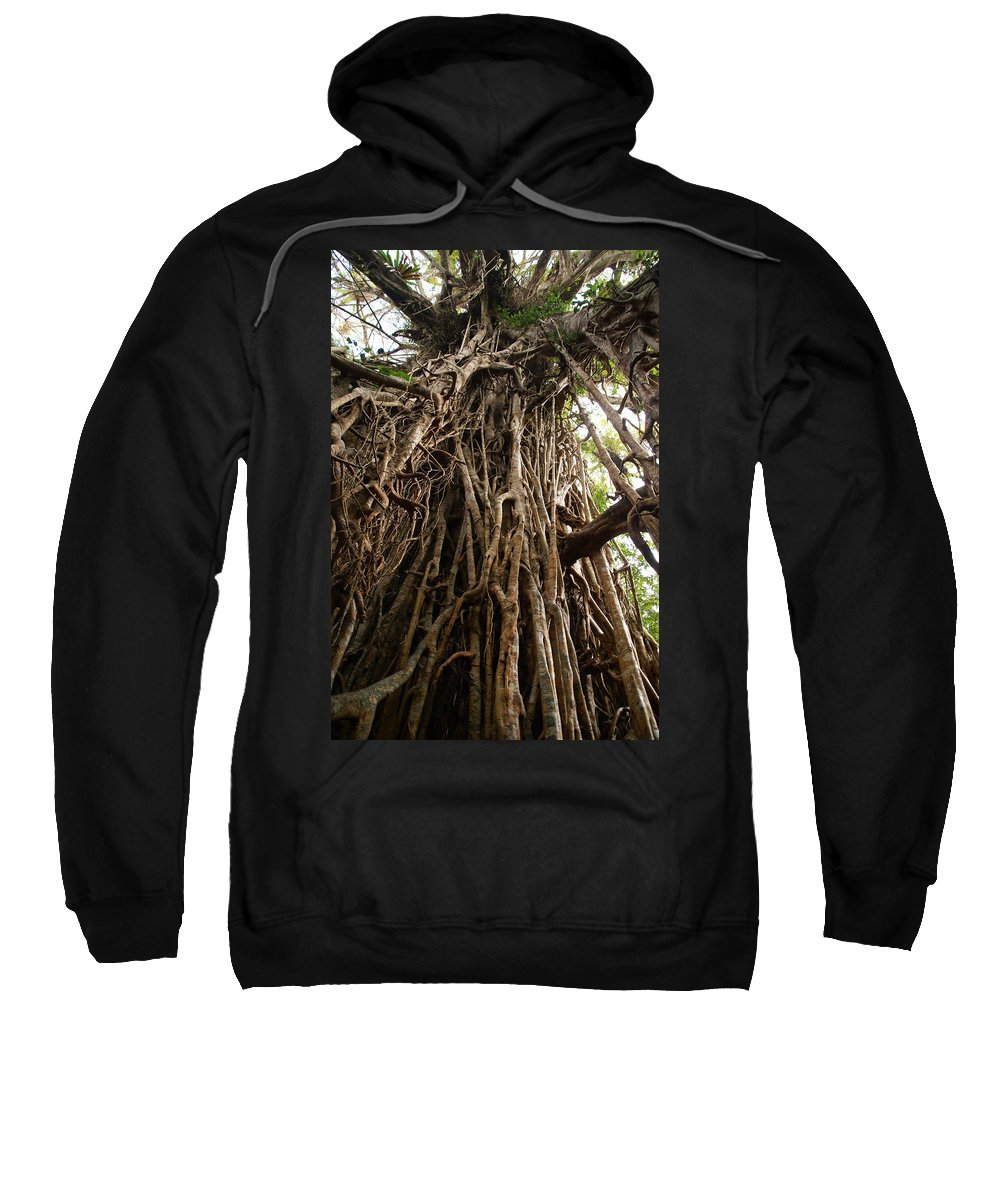 Australia Sweatshirt featuring the digital art Cathedral Fig Tree by Carol Ailles