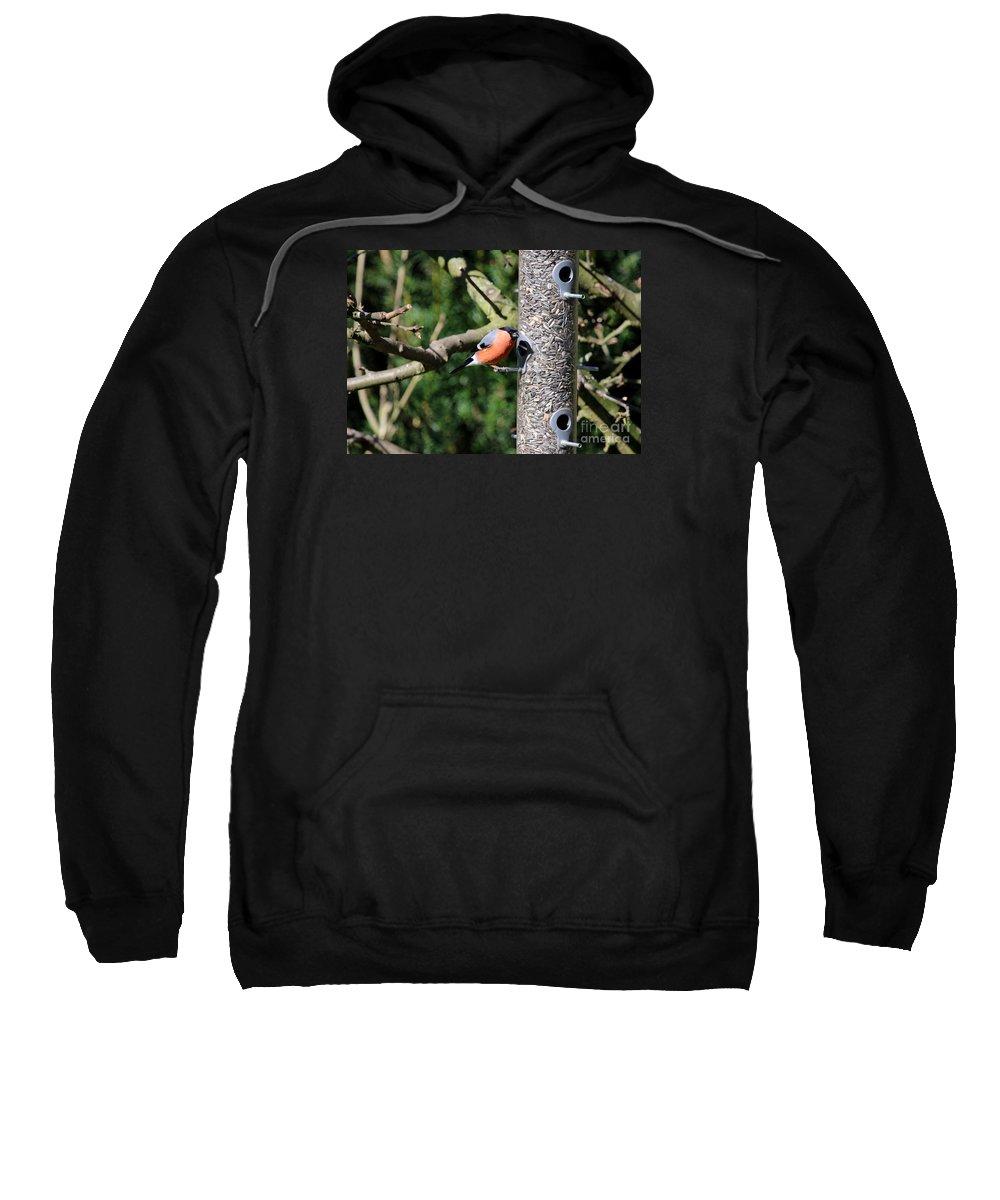 Bird Sweatshirt featuring the photograph Male Bullfinch by Christiane Schulze Art And Photography