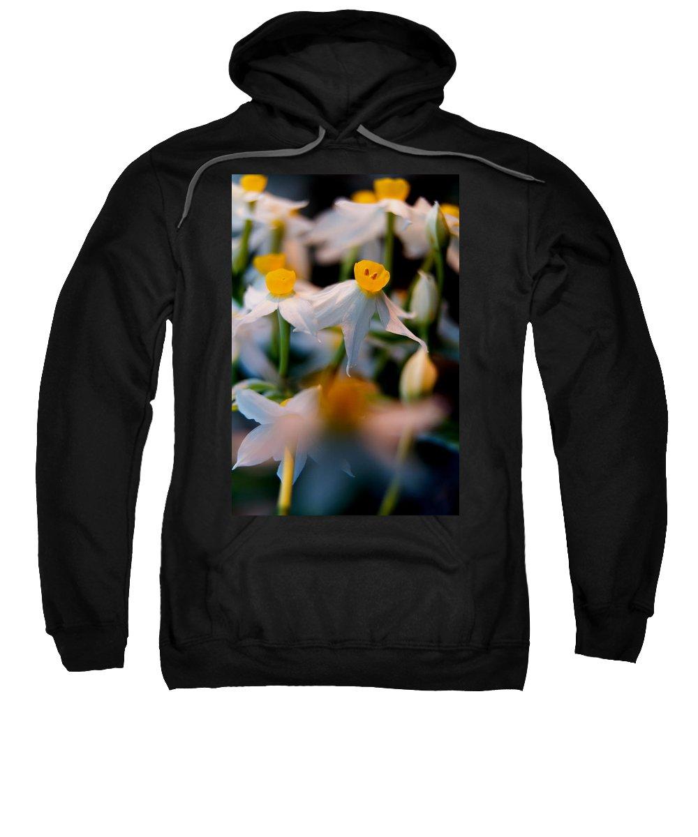 Angustifolius Sweatshirt featuring the photograph Narcissus Tazetta by Stelios Kleanthous