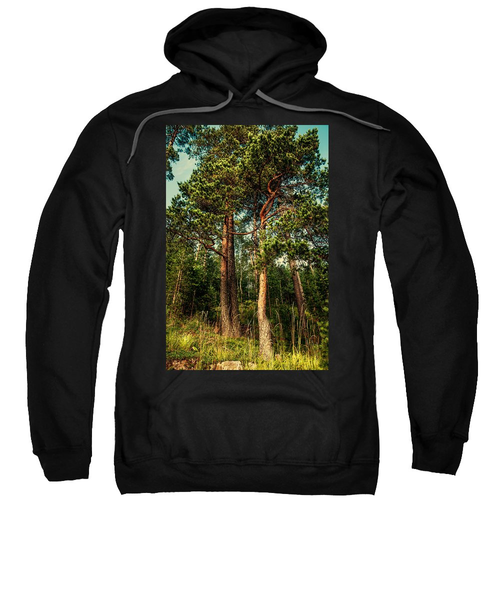 Island Sweatshirt featuring the photograph Northern Forest by Jenny Rainbow