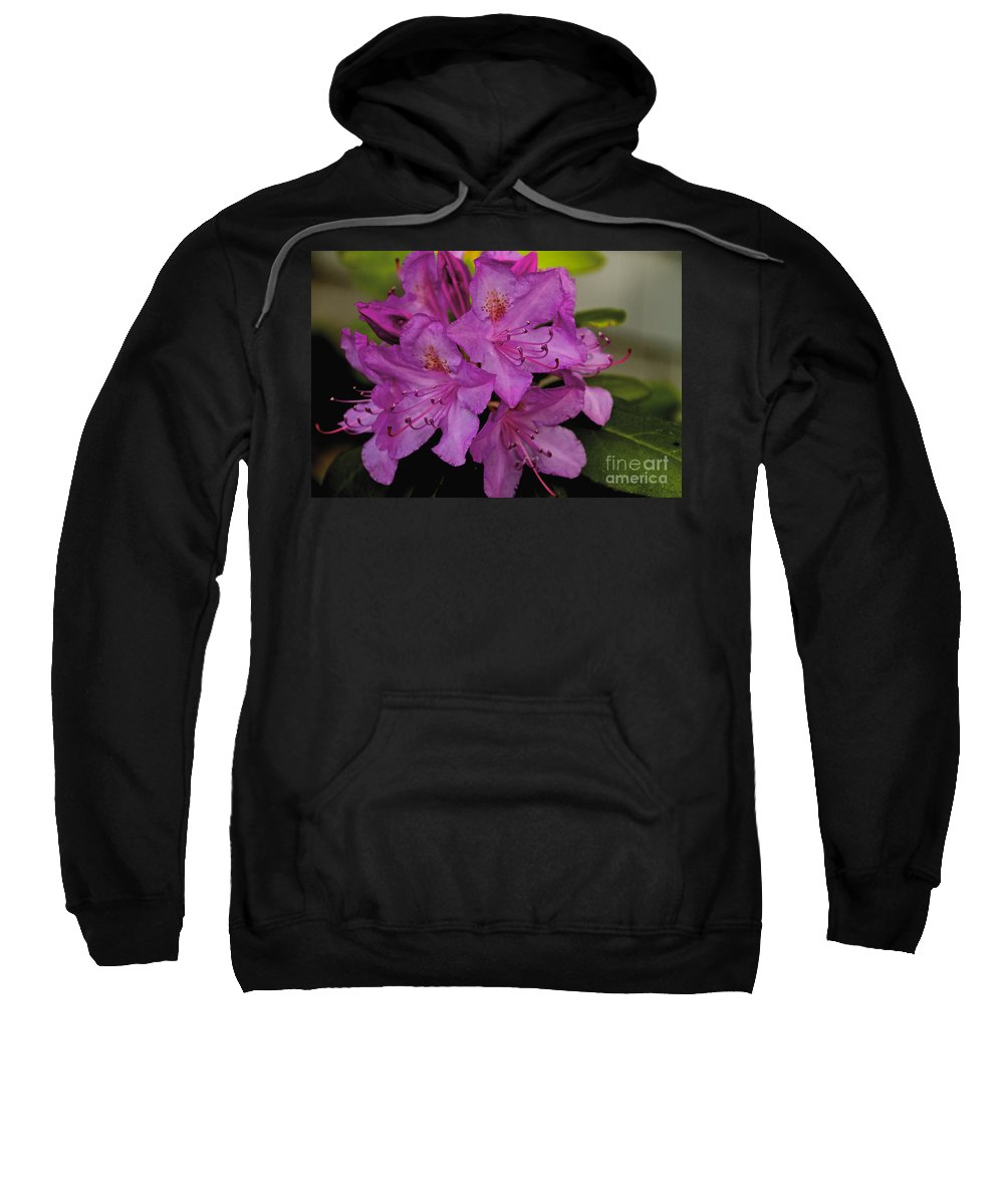 Flower Sweatshirt featuring the photograph Pink Rhododendron by William Norton