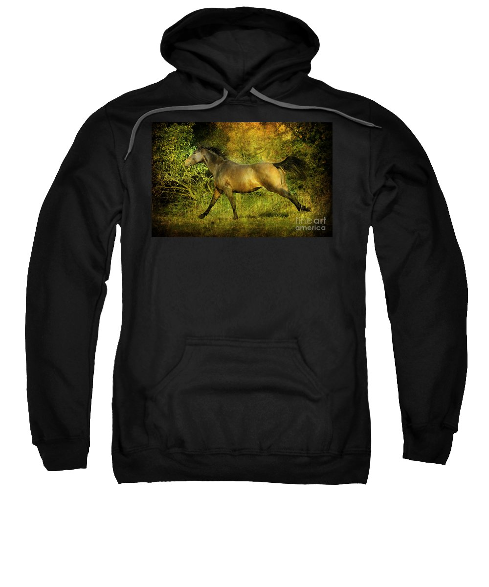 Horses Sweatshirt featuring the photograph Running Free by Angel Ciesniarska