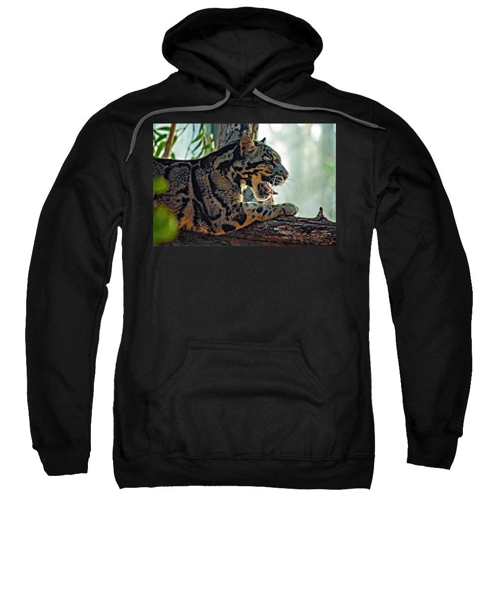 Clouded Leopard Sweatshirt featuring the photograph Sleepy Girl by Steve Harrington