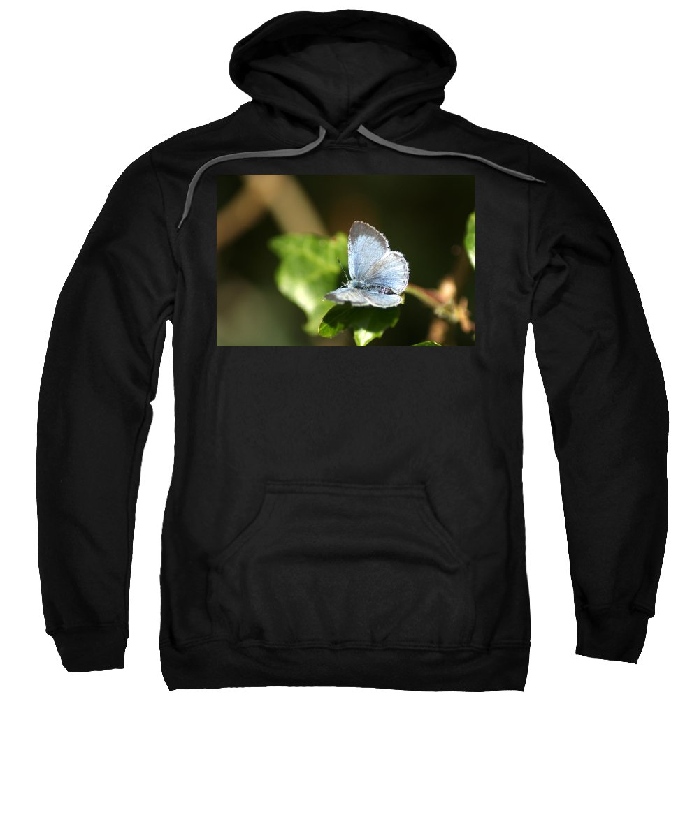 Butterfly Sweatshirt featuring the photograph Small Blue Butterfly by Chris Day