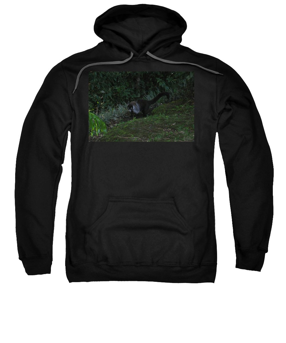 Tayra Sweatshirt featuring the mixed media Tayra Costa Rica Animals Zoo Habitat Indigenous Population Mixing With Travellers Enjoying And Being by Navin Joshi