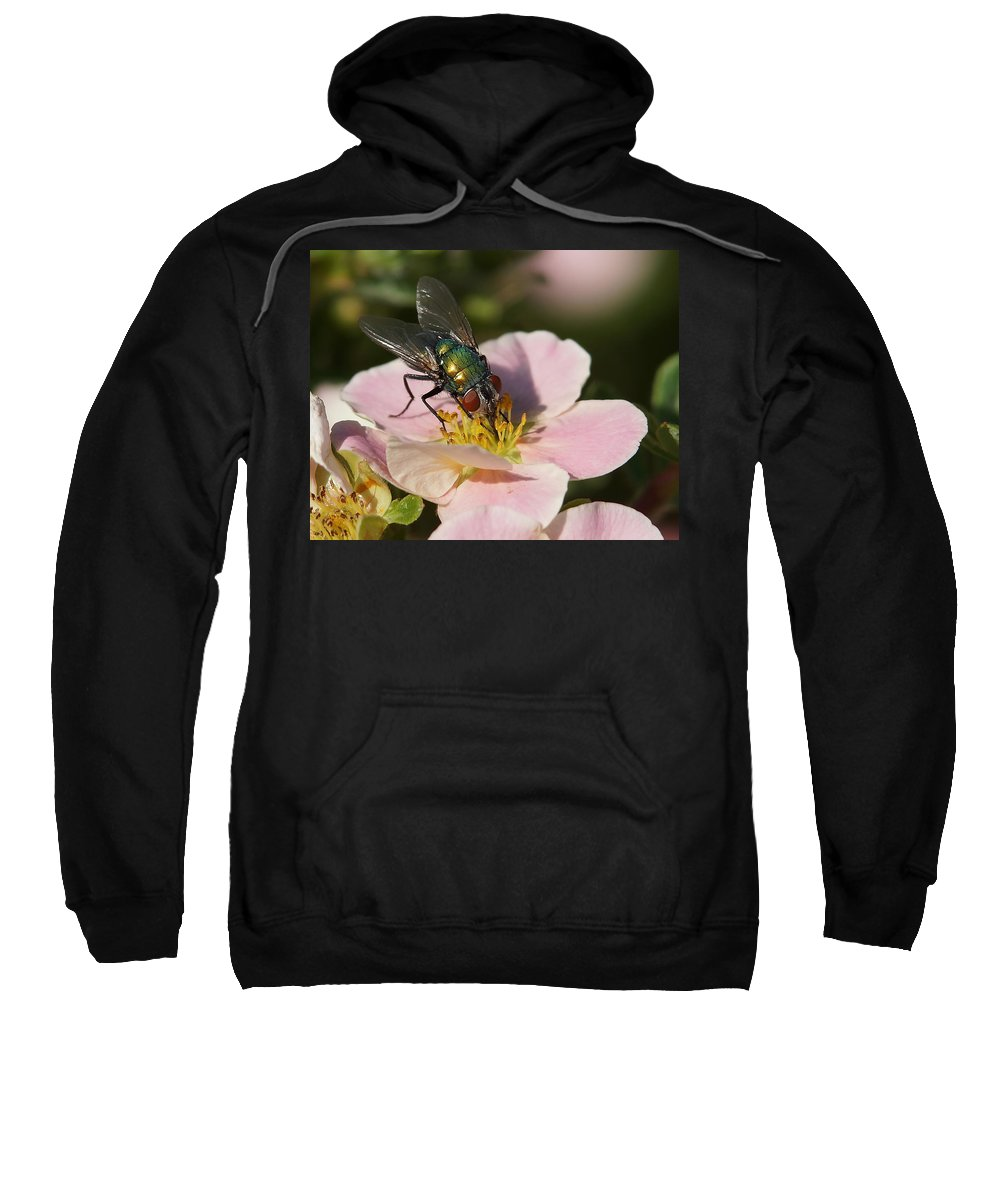 Flies Sweatshirt featuring the photograph The Fly by Ernie Echols
