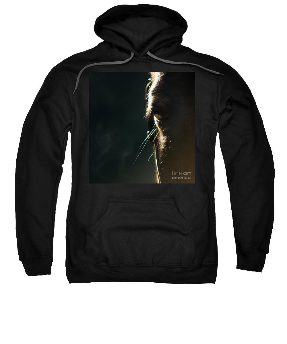 Horse Sweatshirt featuring the photograph the Look by Angel Tarantella