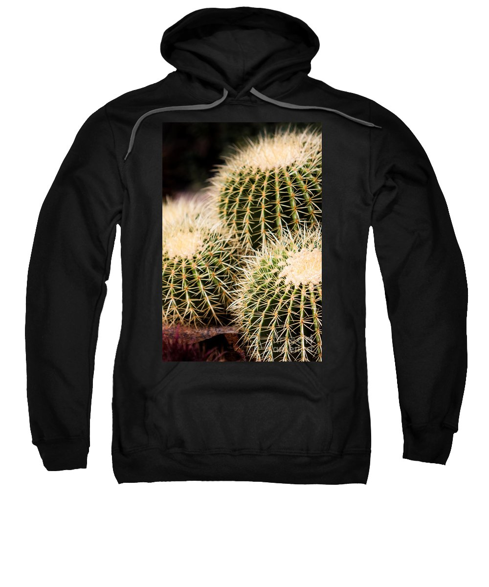 Botanical Sweatshirt featuring the photograph Triple Cactus by John Wadleigh