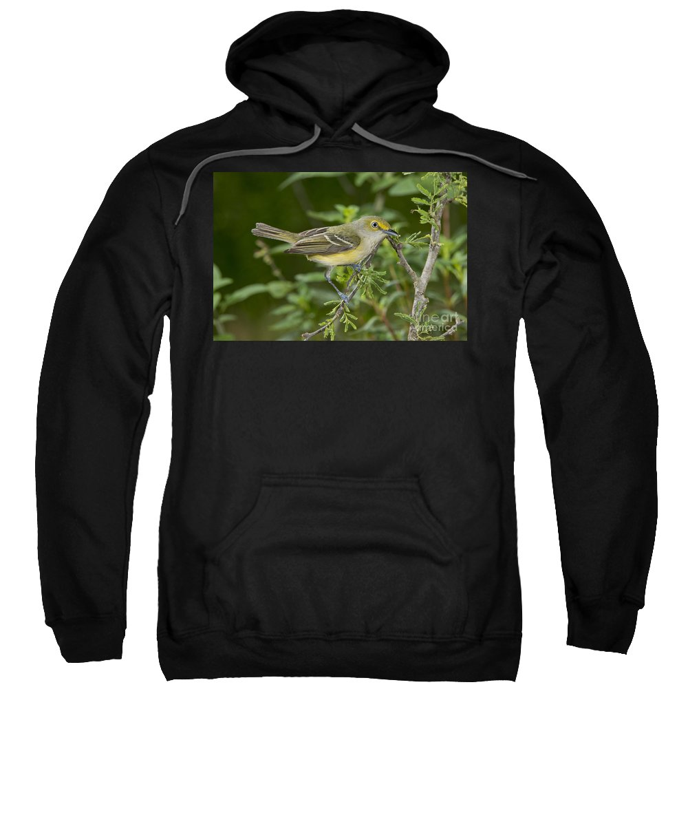 White-eyed Vireo Sweatshirt featuring the photograph White-eyed Vireo by Anthony Mercieca