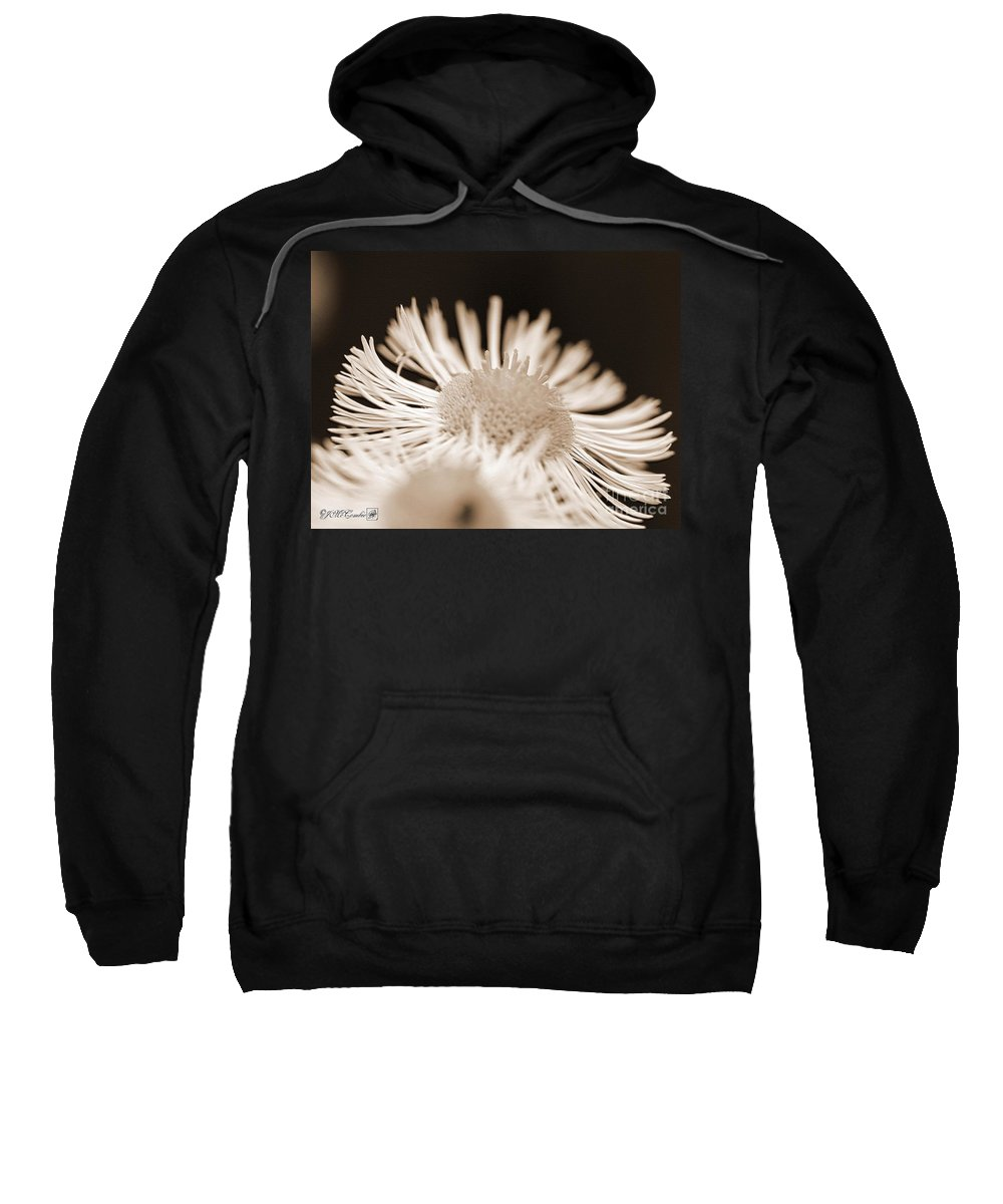 Mccombie Sweatshirt featuring the photograph Wildflower Named Robin's Plantain by J McCombie