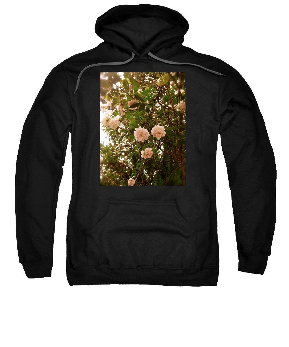 Sweatshirt featuring the photograph Renewal Series by Esther Wilhelm Pridgen